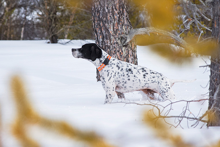 MiniFinder Atto: The GPS tracker that tracks your dog